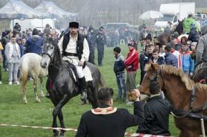 Incuratul cailor 2016 Brancoveni_34