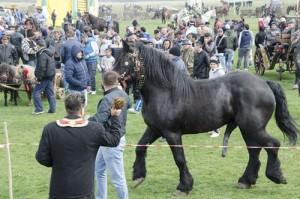 Incuratul cailor 2016 Brancoveni_44