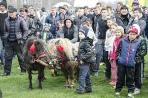Incuratul cailor 2016 Brancoveni_8