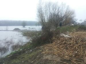 inundatii-dunare4