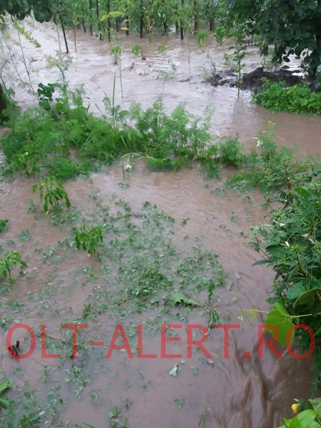inundatii-movileni